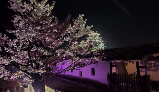 【雑記】姫路城夜桜会「和傘幻想 華灯り」の感想・桜の開花状況【散りかけ】